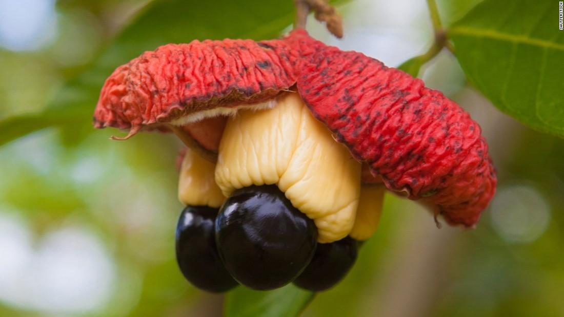 ackee fruit is blending fruit healthy