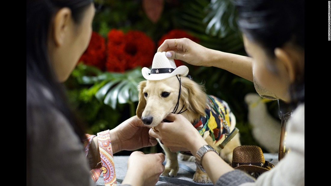 A woman puts a hat on a miniature dachshund at the Interpets pet fair in Tokyo on Friday, March 31.