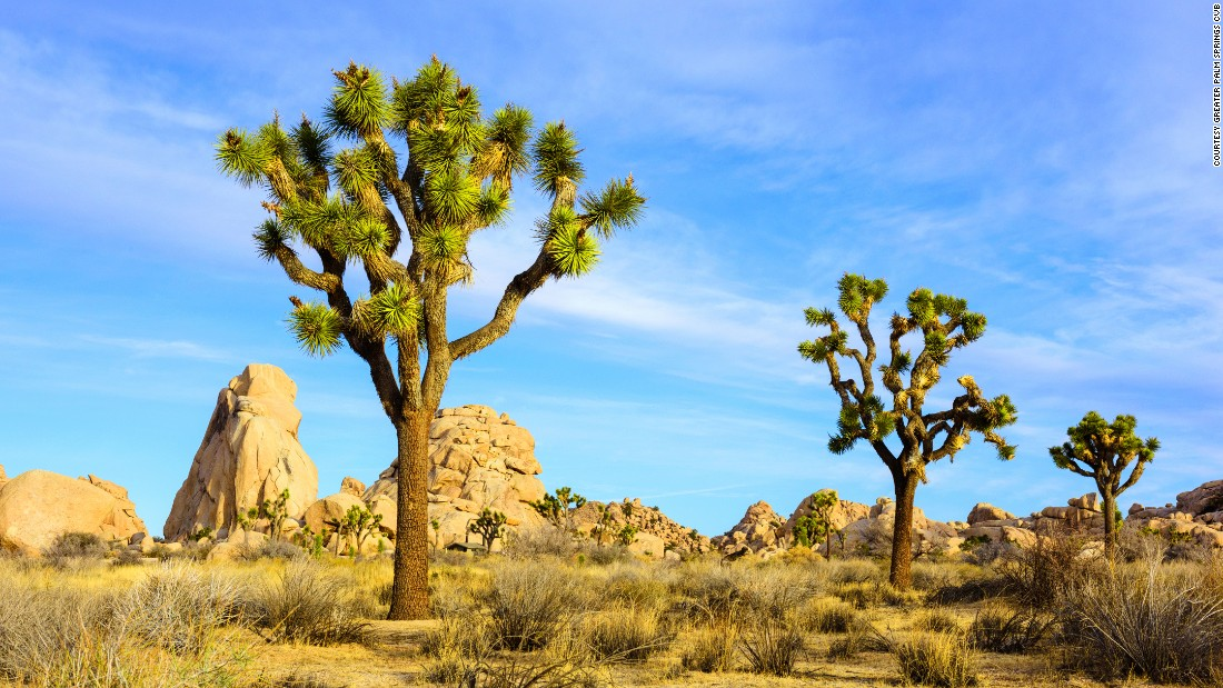 Beyond the Coachella festival, Palm Springs is also know for classic midcentury modern architecture, a buzzy hotel scene and nowhere-else-on-earth landscapes like Joshua Tree National Park (pictured).  Here are more reasons to love this sunny California town.