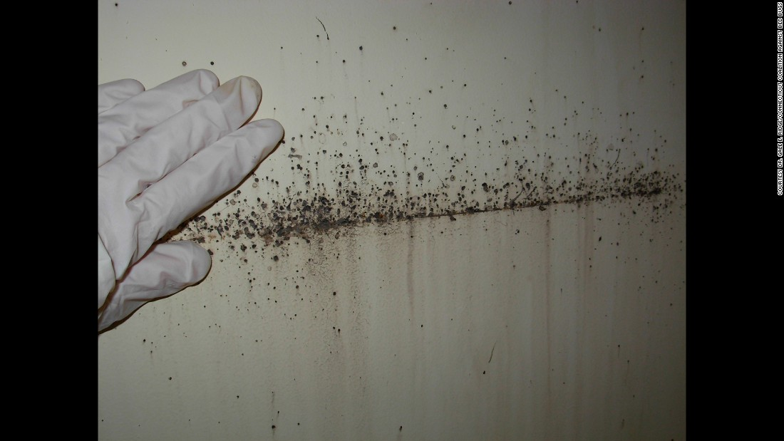 "Besides the bugs themselves, telltale signs of an infestation include reddish-brown excrement, along with left-over skeletons from molting, and tiny pearl-white eggs. <br />Many things can be mistaken for bedbugs, such as lint, carpet beetles, ticks, fleas and <a href=""http://www.cnn.com/2015/08/18/health/mutant-lice/"">lice</a>, so it's important to get samples and take them to an expert for identification."