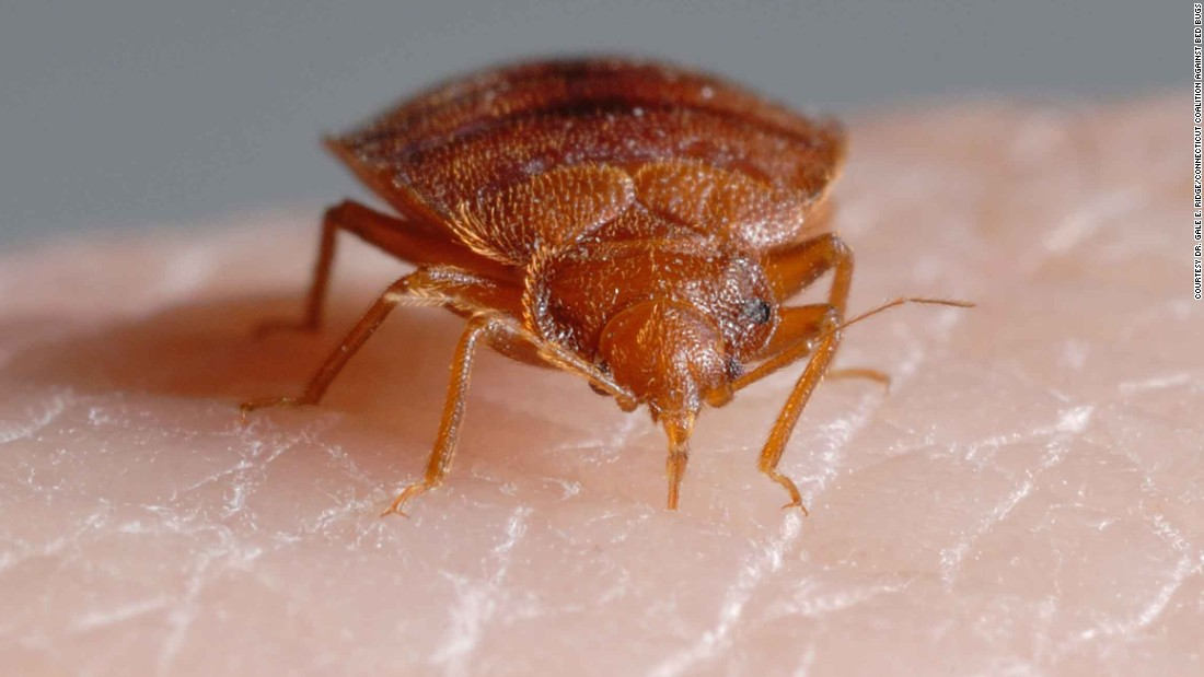 Bed Bugs Signs And Symptoms
