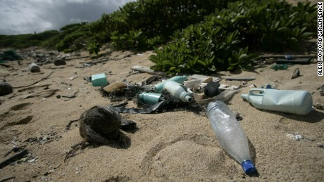 Plastic litter on Kahuku beach, Hawaii