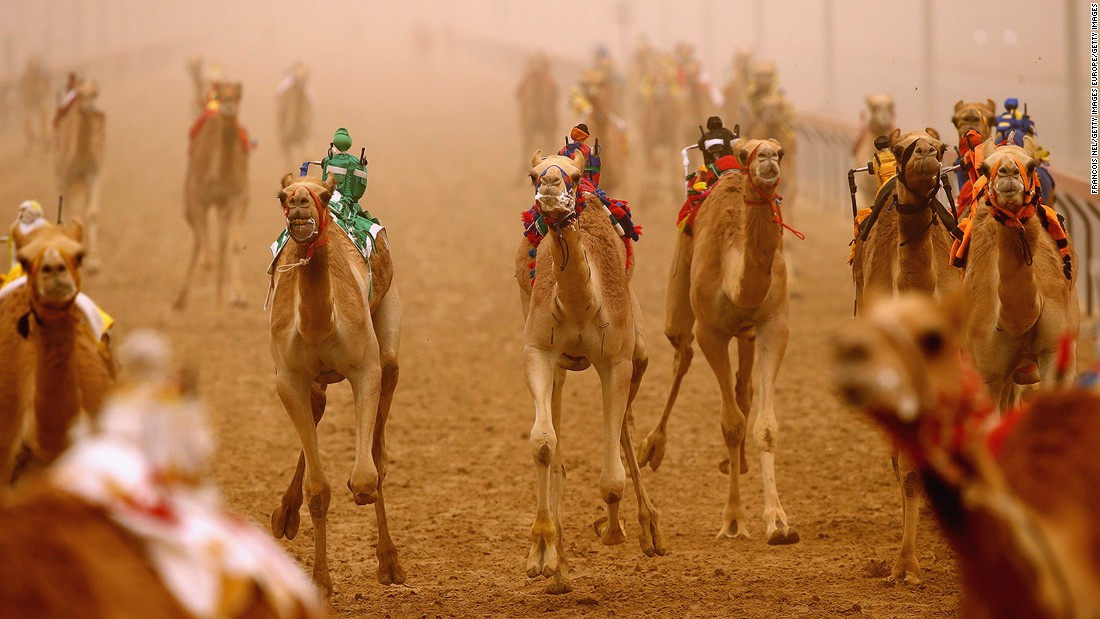 <strong>Al Marmoom camel-racing (Dubai): </strong>Camel-racing is an essential experience in the Middle East, and the most unforgettable race features robot jockeys riding the camels. The robots, when activated by remote control, whip their mounts to make them go faster.