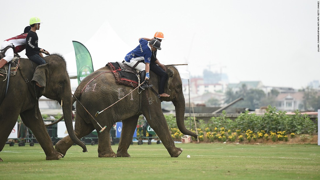 <strong>The King's Cup elephant polo (Thailand):</strong> While this sport is not without controversy, it does at least provide a novel antidote to the horse version.