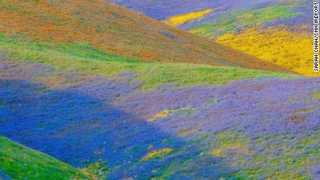 The Temblor Range in California's Carrizo Plain National Monument is covered with wildflowers.