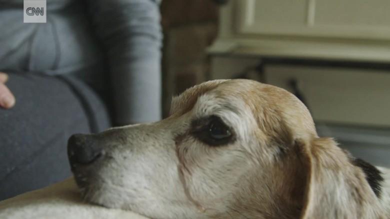 dog sanctuary hospice new jersey pkg_00001323