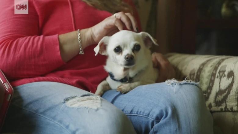 dog sanctuary hospice new jersey pkg_00003918