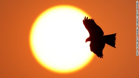 DELHI, INDIA - OCTOBER 04:  A bird of prey flies overhead at sunset at the Major Dhyan Chand National Stadium during day one of the Delhi 2010 Commonwealth Games on October 4, 2010 in Delhi, India.  (Photo by Matt King/Getty Images)