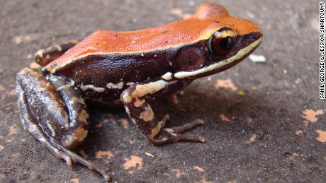 Researchers use frog mucus to fight the flu