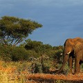 Beautiful South Africa 18 Kruger National Park-103360968