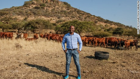 Cash cows: Why investors are buying pregnant cattle
