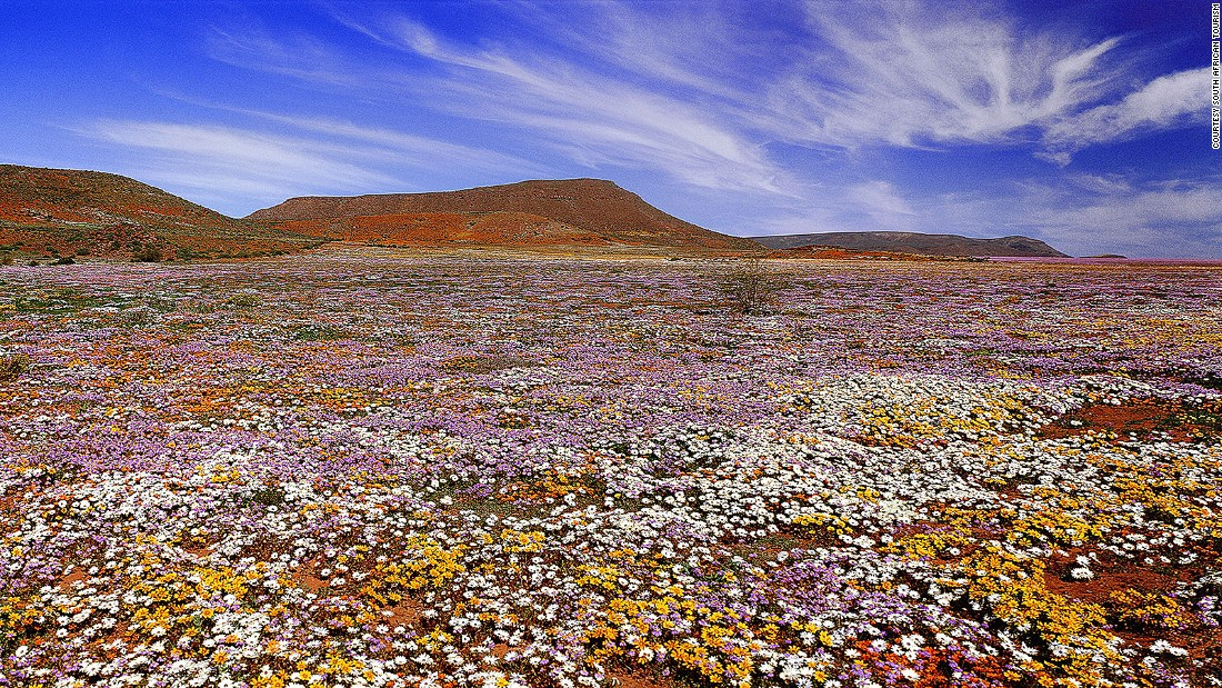 <strong>Namaqualand, Northern Cape:</strong> In September, the desert across Namaqualand is blanketed with endless fields of colorful blossoms.