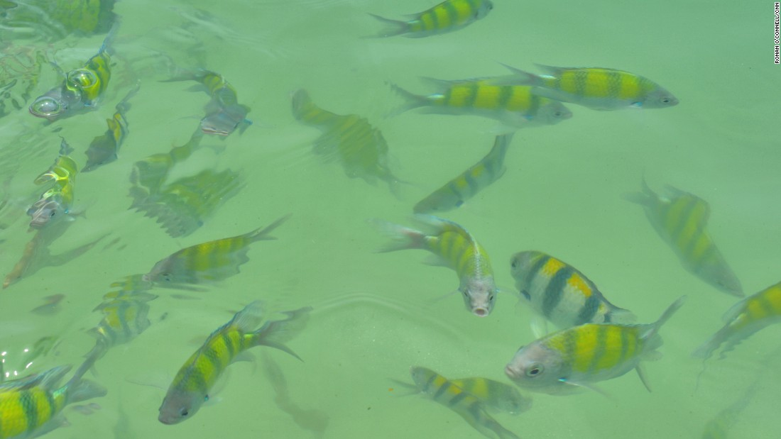 <strong>Clear seas: </strong>Fish frolic in the translucent ocean waters of Langkawi.
