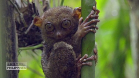 Philippine Tarsier Foundation_00004402