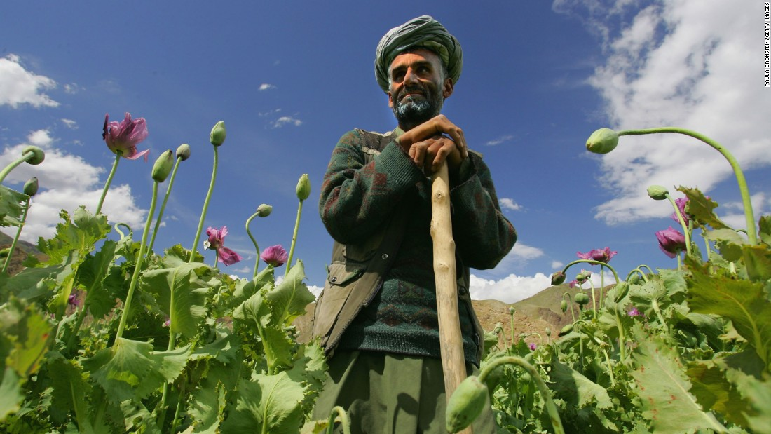 Poppy farmer Abdul Rassod looks over his field in Panshar, Afghanistan, on May 29, 2005. Afghanistan is the world's largest producer of opium and heroin.