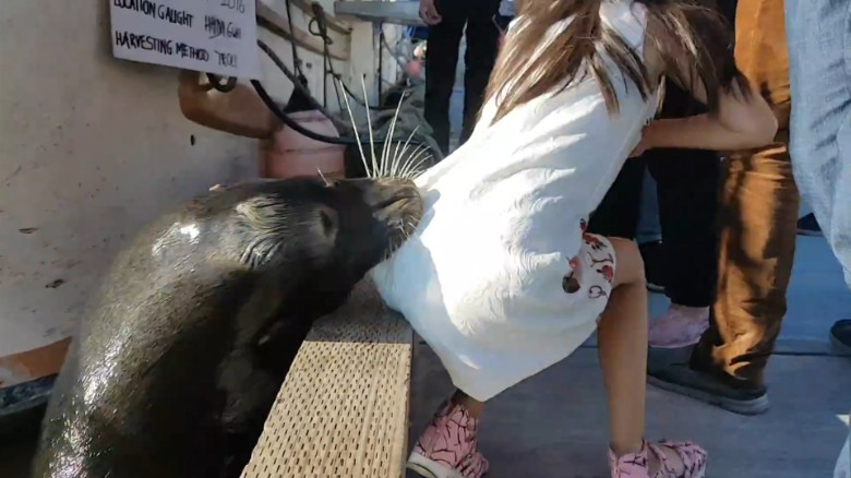 Sea lion drags girl into wharf orig vstan dlewis_00000000