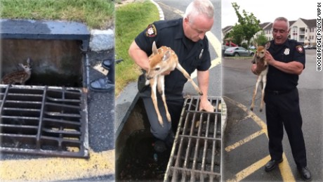 WPIX fawn rescued