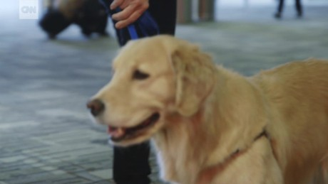 reduce travel stress airport therapy dogs sm nccorig_00010406.jpg