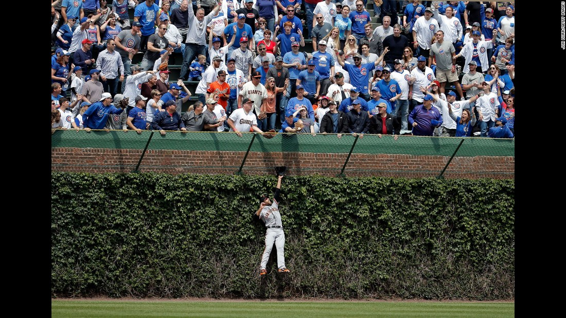 San Francisco's Mac Williamson leaps into the Wrigley Field ivy, but he can't reach the ball hit by the Chicago Cubs' Kris Bryant on Thursday, May 25.