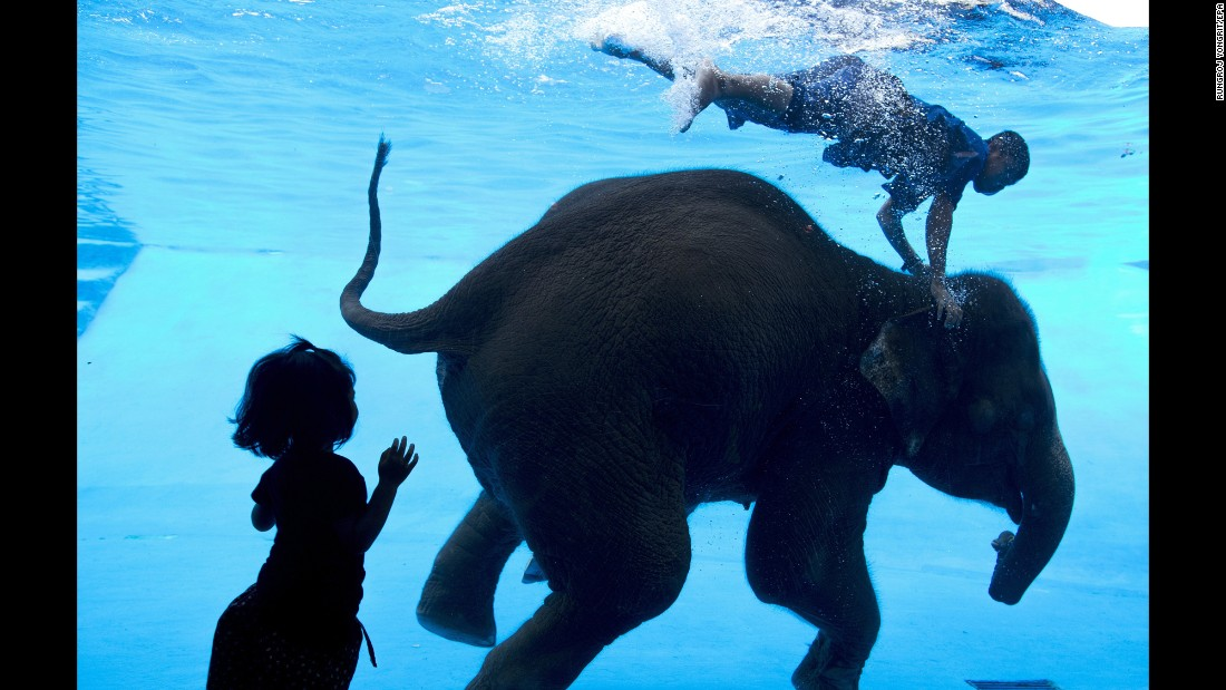 A child watches an elephant swim Thursday, June 1, at the Khao Kheow Zoo in Thailand's Chonburi Province.