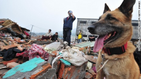 "TO GO WITH China-quake-Netherlands-animal-dogs by Ian Timberlake Search dog ""Rifka"" waits to be unleased amid the rubble during a search and rescue operation by the Netherlands-based unit SIGNI on May 25, 2008 in southwest China's quake-stricken Sichuan province. The dogs are trained to find the living and the dead and have worked in the 2004 tsunami in Sri Lanka an Thailand as well as the 2005 Pakistan quake, Hurricane Katrina in the United States, and other quakes in Turkey and Morocco. AFP PHOTO/Frederic J. Brown (Photo credit should read FREDERIC J. BROWN/AFP/Getty Images)"