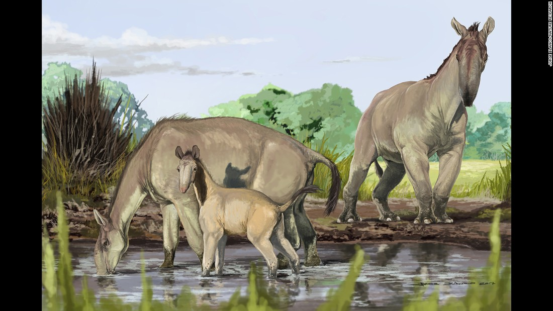 An artist's reconstruction shows Macrauchenia patachonica, which roamed South America thousands of years ago. Combining a range of odd characteristics from llamas and camels to rhinos and antelopes, Macrauchenia defied clarification until now and has been added to the tree of life. It belongs to a sister group of Perissodactyla, which includes horses, rhinos and tapirs.