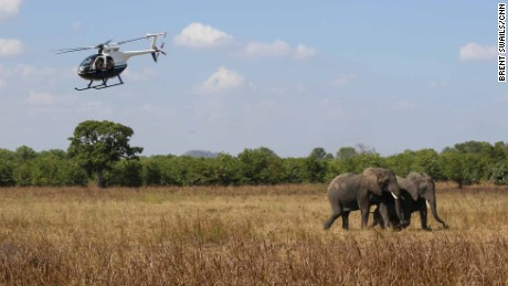 Elephants make once-in-a-lifetime move to new home