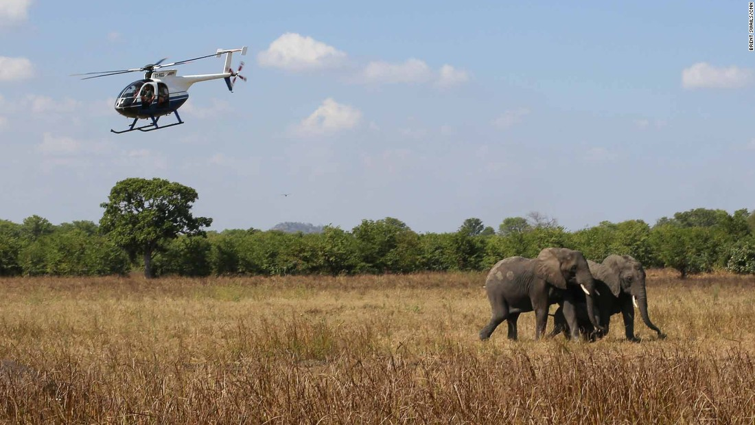 Elephants roam freely in Liwonde National Park. NGO African Parks took over the reserve in 2015, securing the park's borders to keep poachers out.