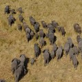 15 cnn Malawi elephants