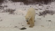 Trip of a lifetime to photograph polar bears