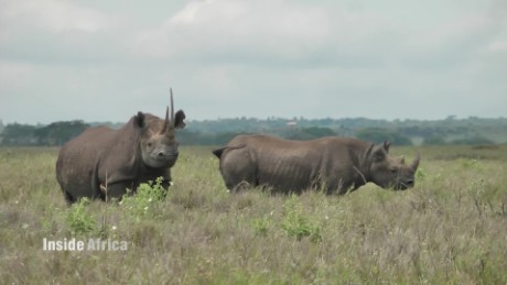 Inside Africa How microchips are saving Kenya's Black Rhinos B_00062118.jpg