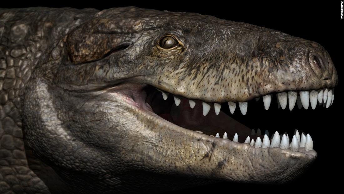 "Razanandrongobe sakalavae, or ""Razana,"" was one of the top predators of the Jurassic period in Madagascar 170 million years ago. Although it looks different from modern-day crocodiles and had teeth similar to a T. rex's, Razana was not a dinosaur but a crocodile relative with a deep skull."