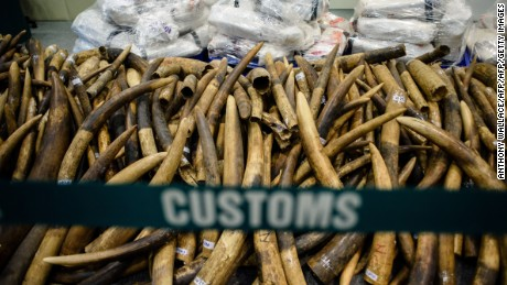 Seized elephant ivory during the news conference Thursday.