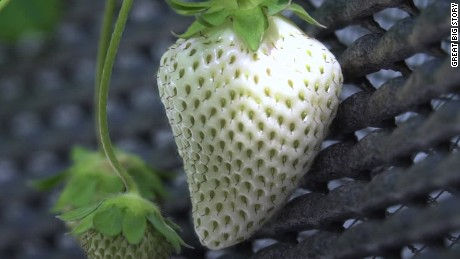 gbs japan white strawberry expensive fruit_00000512.jpg