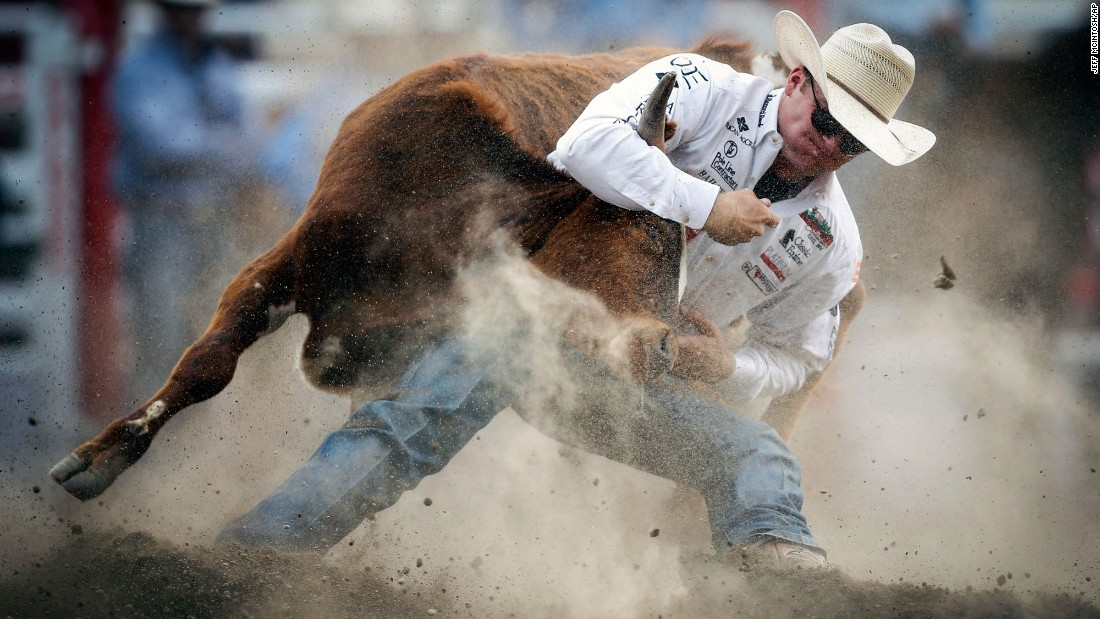 Dakota Eldridge wrestles a steer Sunday, July 9, during the Calgary Stampede in Calgary, Alberta.