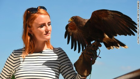 Rufus the Harris hawk is held by handler Imogen Davies as she is interviewed by the media at The All England Lawn Tennis Club in Wimbledon, southwest London, on July 5, 2017 on the third day of the 2017 Wimbledon Championships. Rufus the Hawk is used at the All England Club to keep pigeons away from the venue.  / AFP PHOTO / Justin TALLIS / RESTRICTED TO EDITORIAL USE        (Photo credit should read JUSTIN TALLIS/AFP/Getty Images)