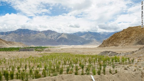 A tree plantation receiving water from ice stupas. The trees are grown for timber, but they also add to the richness of nature of the valley.
