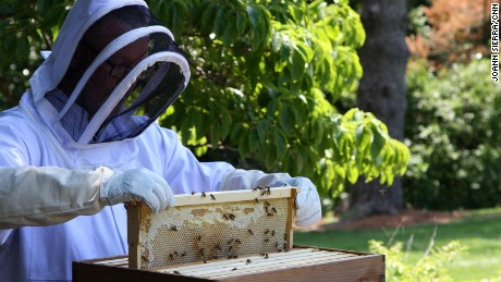 Derrick Williams, horticulturalist at the vice president's residence, examines the hives
