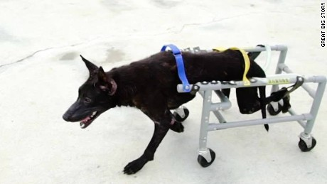 gbs wheelchairs for animals_00014522.jpg