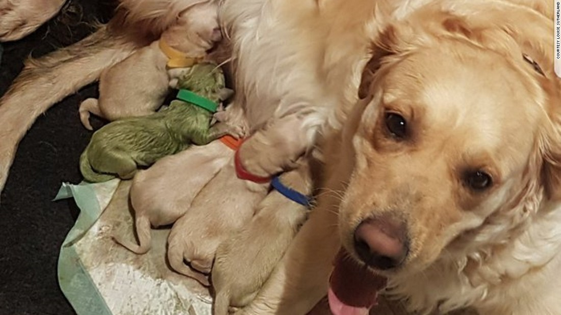 how to stop pica in puppies
