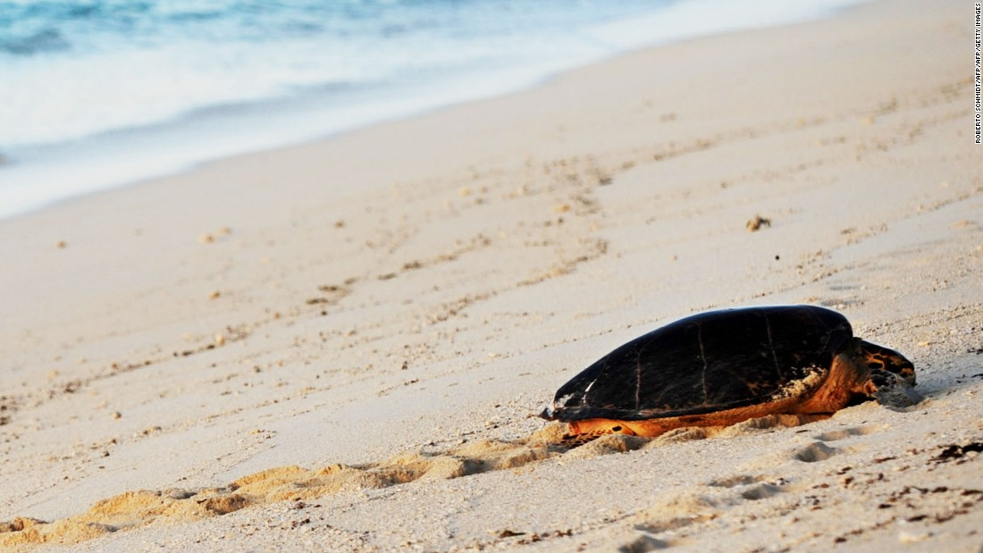 The teacher protecting marine turtles in the Seychelles