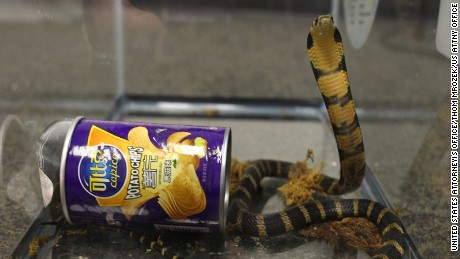 A Southern California man was taken into custody for illegally smuggling three king cobras hidden in potato chip canisters, according to a press release from the Los Angeles District Attorneyís Office. Rodrigo Franco, 34, was charged with one count of illegally importing merchandise into the United States