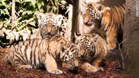 The quadruplets, born in June, made their first outdoor appearance on Thursday.