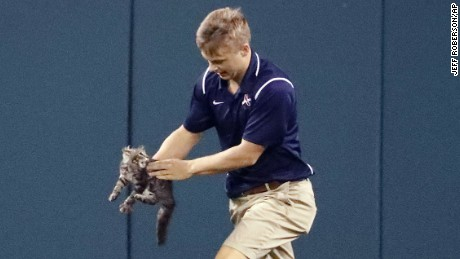 A member of the Busch Stadium grounds crew removes a cat that ran onto the field during the sixth inning of a baseball game between the St. Louis Cardinals and the Kansas City Royals Wednesday, Aug. 9, 2017, in St. Louis. (AP Photo/Jeff Roberson)
