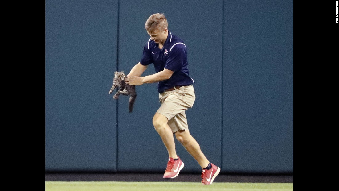 "Lucas Hackmann, a member of the Busch Stadium grounds crew, removes a cat that ran onto the field during the sixth inning of a St. Louis Cardinals baseball game on Wednesday, August 9. When the game resumed, Cardinals catcher Yadier Molina hit a grand slam to give the team the lead. The ""Rally Cat,"" which left Hackmann with scratch and bite injuries, <a href=""http://bleacherreport.com/articles/2726672-cardinals-hit-grand-slam-after-rally-cat-invades-field"" target=""_blank"">later went missing,</a> the Cardinals said."