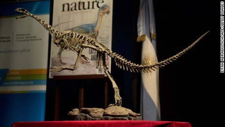 A replica of a Chilesaurus diegosuarezi, a bizarre genus of herbivorous theropod dinosaur, is exhibited at the Bernardino Rivadavia Natural Sciences Museum in Buenos Aires, Argentina, on June 23, 2015. The bizarre creature was named after the South American country where its fossilised remains were found, and the seven-year old boy, Diego Suarez, who discovered the first bones in 2004 while exploring the Andes mountains with his geologist parents. Chilesaurus diegosuarezi had a bird-like beak with leaf-shaped teeth, evidence that it feasted on plants, but with hind leg features similar to theropod dinosaurs, the group into which it was slotted with notorious killers like TyrannosaurusRex, Velociraptor and the horned Carnotaurus. AFP PHOTO/EITAN ABRAMOVICH        (Photo credit should read EITAN ABRAMOVICH/AFP/Getty Images)