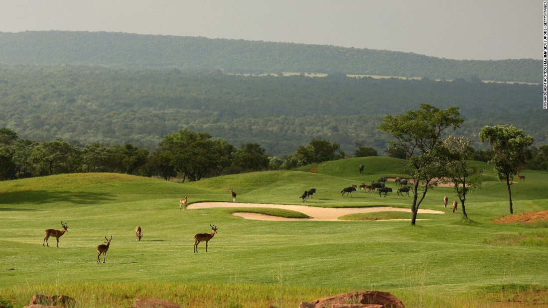 As well as a stunning landscape, wandering wildlife provides an added extra special ingredient to the course's attractions. Here impala and water buffalo roam across the seventh hole.