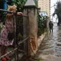 08 Irma Cuba 0909