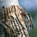 06.trypophobia woodpecker