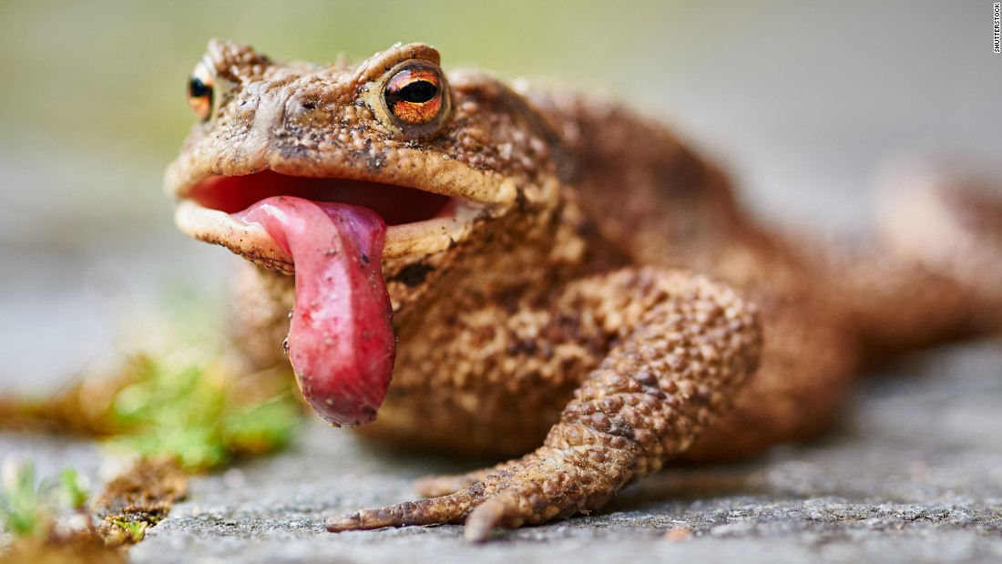 The ridges and bumps on this toad are yet more examples of a potential source of discomfort. To cope with their fears, many trypophobics suggest such techniques as deep breathing, distraction and avoidance, if possible.